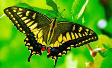colectionam fluturi sau lasam crinii sa infloreasca