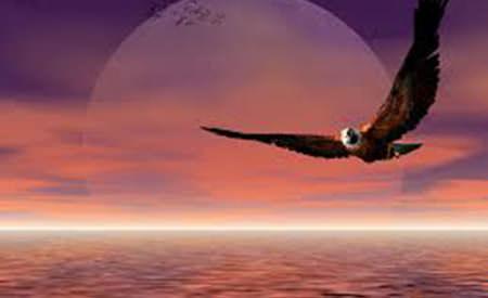 constiinta-vulturului