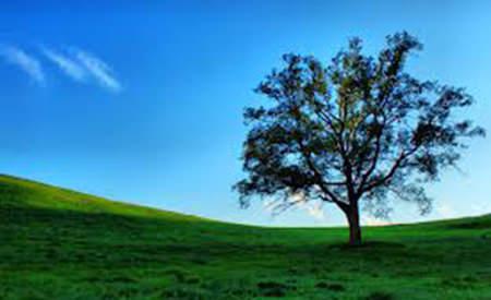 invidiez copacul