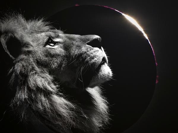 Luna Noua in Leu si Eclipsa totala de Soare 21 august Intensitate maxima